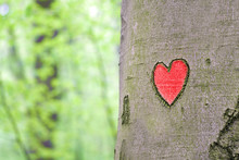 Red Heart Carved In The Tree