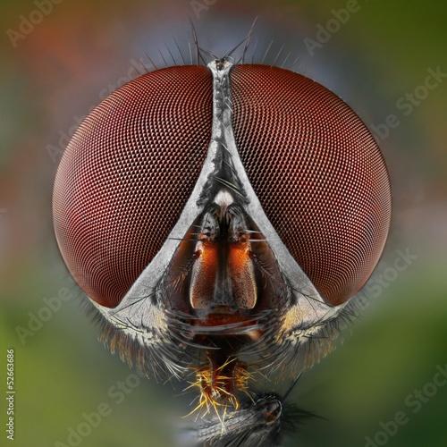 Türaufkleber Makrofotografie Extreme sharp and detailed study of fly head