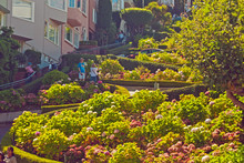 Lombard Street With Flowers In...