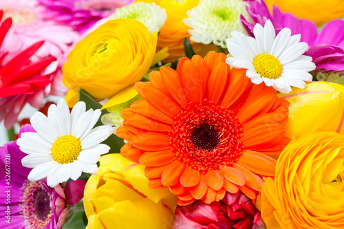 Recess Fitting Gerbera Blumenwiese