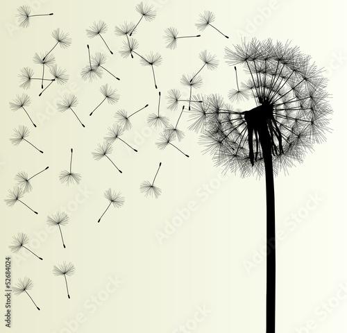 Blow Dandelion vector background
