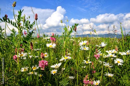 Foto  Einladung zum Entspannen: Bunte Sommerblumen-Wiese