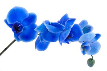 Fototapeta Orquídea