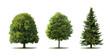 Leinwandbild Motiv Bäume