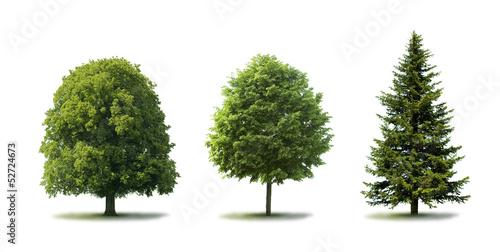 Fotografie, Tablou Bäume