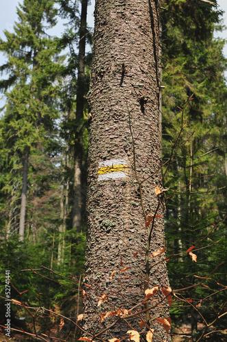 Fotografie, Obraz  Mountain Trial signpost