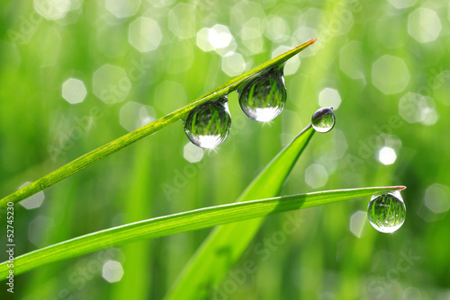 Canvas Print Dew drops close up