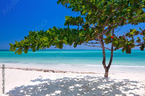 Foto-Rollo - Zanzibar tropical tree at the beach