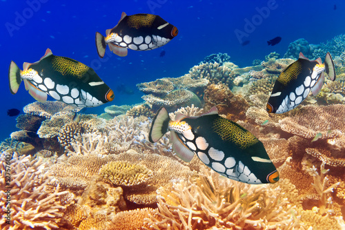 pack of tropical fishes over a coral reef #52757600