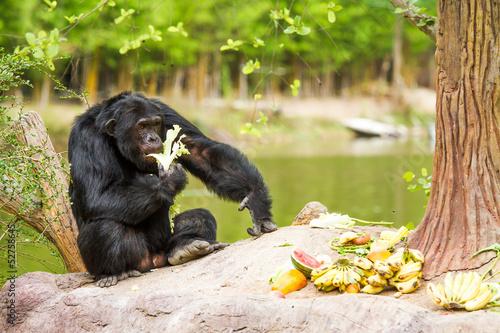 Foto op Plexiglas Indonesië chimpanzee in chiangmai nightsafari chiangmai Thailand