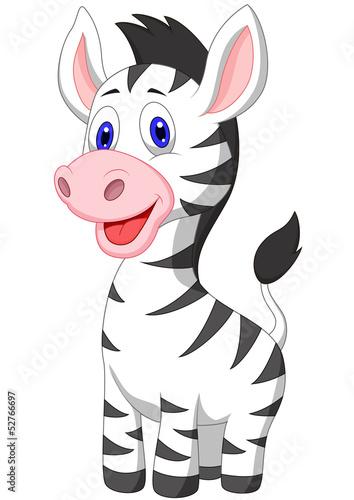 mala-zebra-na-bialym-tle
