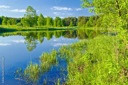 Foto op Canvas Pistache The last wild places. Landscape with Narew river.