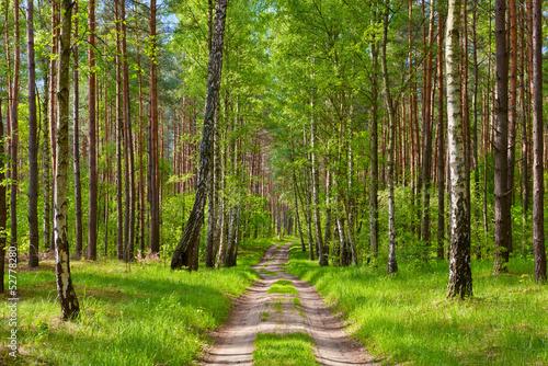 Deurstickers Berkbosje The way by the forest. Beautiful wallpaper.