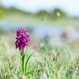 Orchidea na tle natury