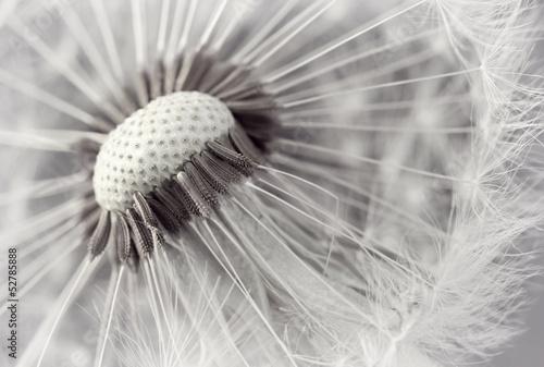 Romantisches Weiß
