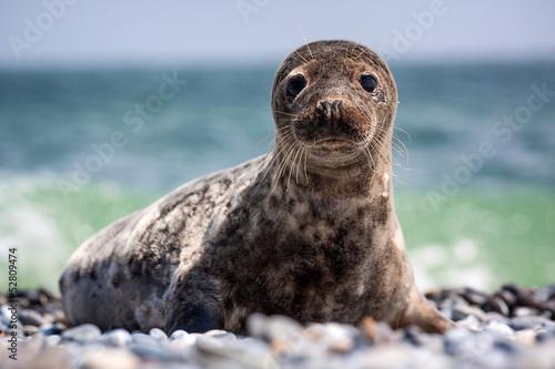 Fototapeta premium seal