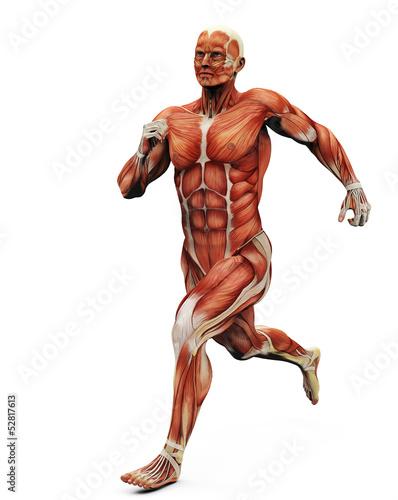 Fotografie, Obraz  muscle man running back