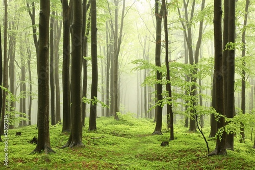 Spring beech forest in the mountains of the southern Polish