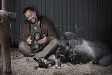 Zookeeper With Gorilla And Baby