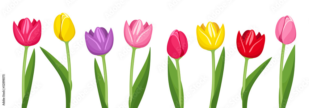 Fototapety, obrazy: Tulips of various colors. Vector illustration.