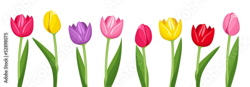Photo  Tulips of various colors. Vector illustration.