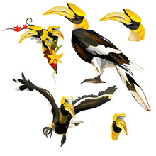 Collection Of Hornbill