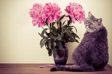 Cat And Flowers Bouquet In Vas...