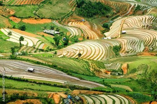 obraz dibond Tarasy ryżowe w północnym Wietnamie