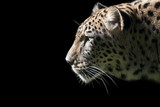 Beautiful Leopard portrait on black background