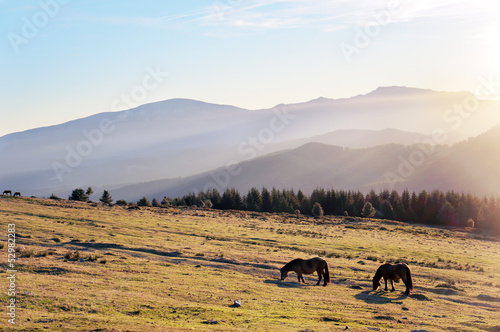 Photo  horses at the morning on mountains with beautiful light