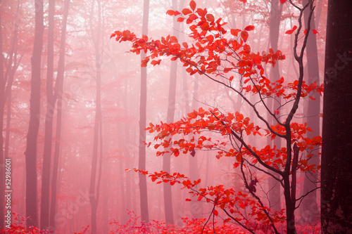 Fotobehang Candy roze Foggy autumn day into the forest