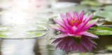 Fototapeta Fototapeta w kwiaty na ścianę - Pink lotus
