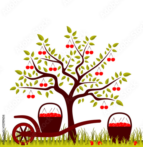 Foto op Canvas Vogels in kooien cherry harvest