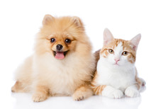 Orange Cat And Spitz Dog Toget...