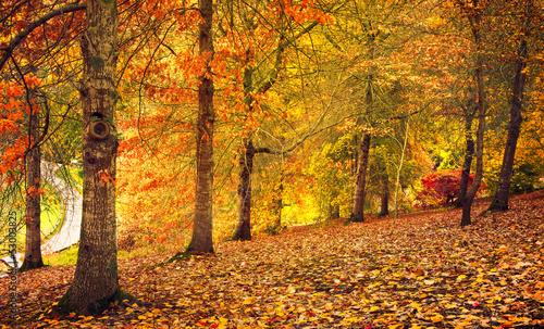 Autumn Stroll © Kwest
