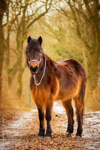 Fotografía  Ein Pony im Wald