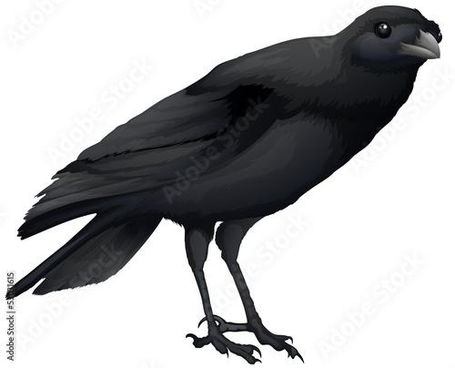 Canvastavla A crow