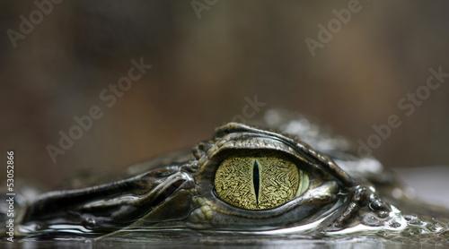 Foto op Plexiglas Krokodil Caimano dagli occhiali -