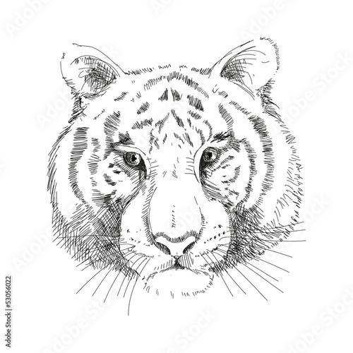 Poster Croquis dessinés à la main des animaux Tiger Face, Vector
