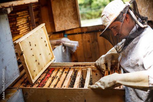 Working apiarist Canvas Print