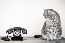 Vintage Telephone And Big Cat ...