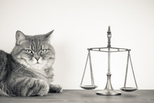 Scales And Cat On A Table. Vintage Sepia Photo