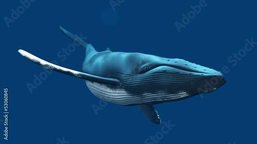 Photo  クジラ