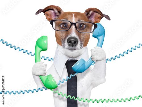 Photo business dog