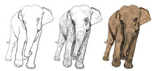 The Vector Of Asia Elephant