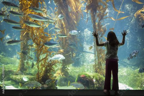 Fotografie, Obraz  Young Girl Standing Up Against velké akvárium pozorovací sklo