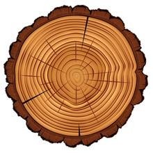 Cross Section Of Tree Stump, V...