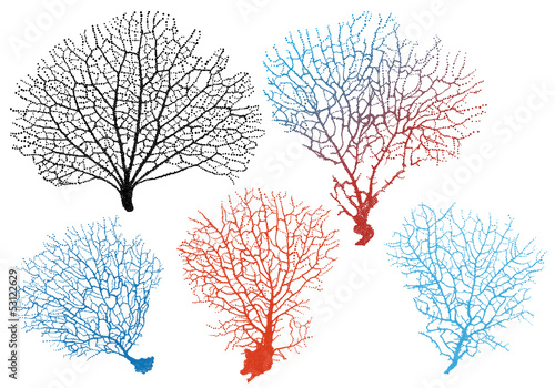 Valokuvatapetti sea fan corals, vector set