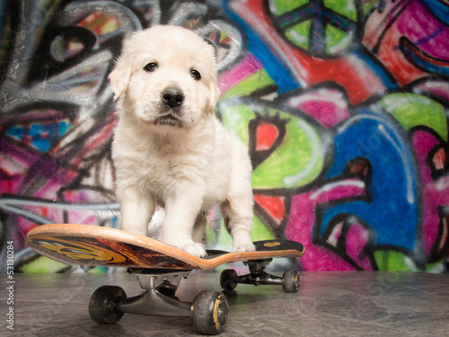 Skateboard Puppy
