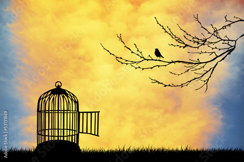 Acrylic Prints Birds in cages Bird cage